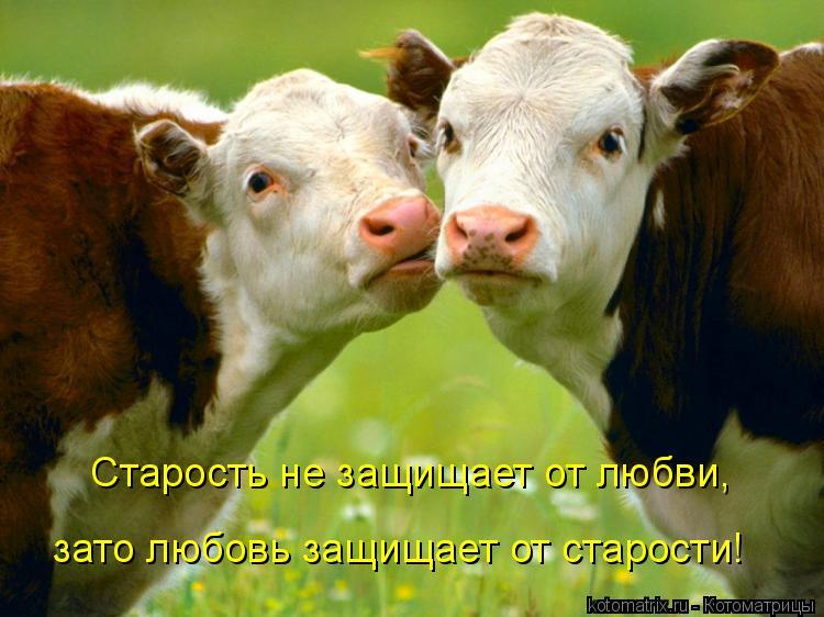 Котоматрица: Старость не защищает от любви, зато любовь защищает от старости!
