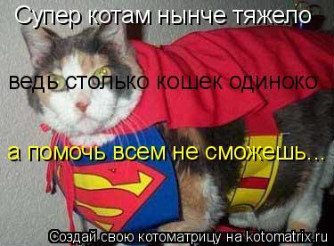 Котоматрица: Супер котам нынче тяжело ведь столько кошек одиноко а помочь всем не сможешь...