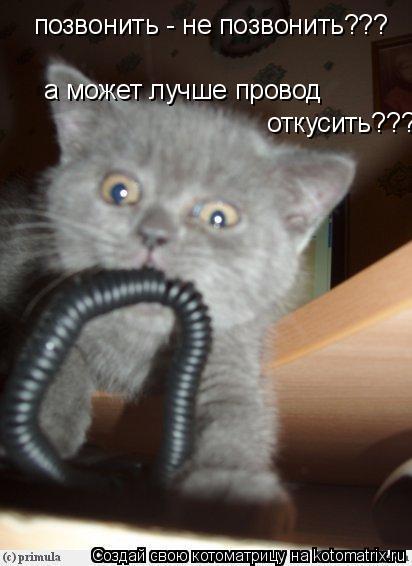 Котоматрица: позвонить - не позвонить???  а может лучше провод  откусить???