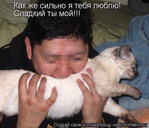 Котоматрица: Как же сильно я тебя люблю! Сладкий ты мой!!!
