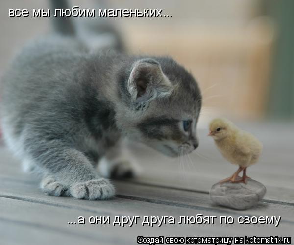 Котоматрица: все мы любим маленьких... ...а они друг друга любят по своему