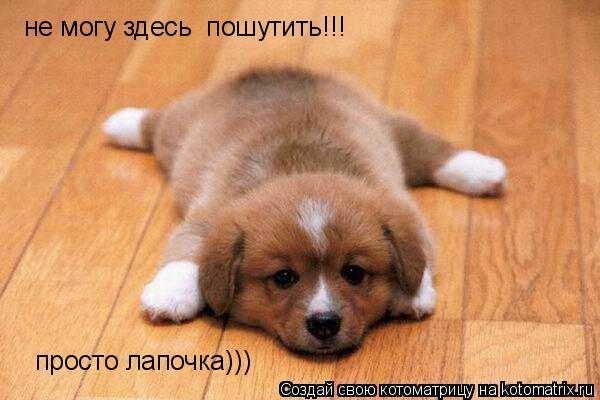 Котоматрица: не могу здесь  пошутить!!! просто лапочка)))