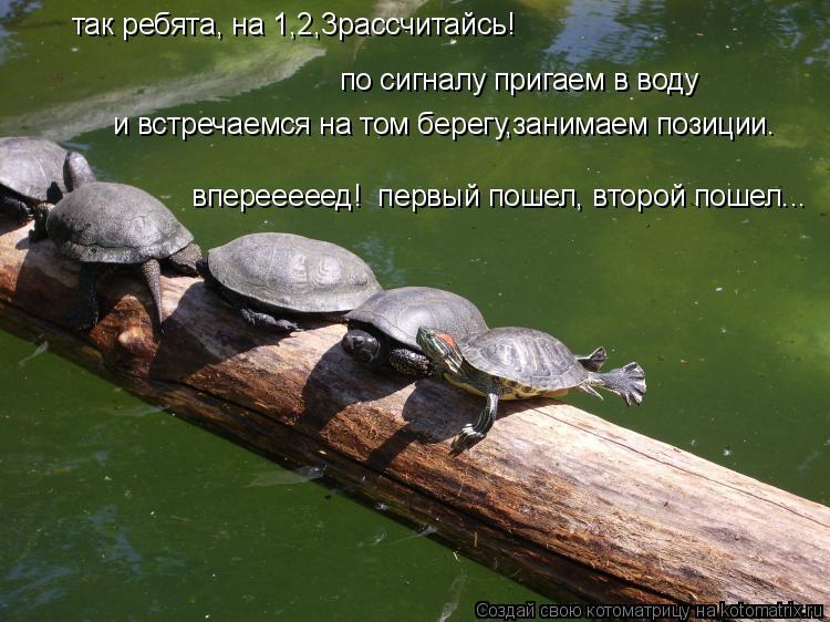 Котоматрица: так ребята, на 1,2,3рассчитайсь!  по сигналу пригаем в воду и встречаемся на том берегу,занимаем позиции. вперееееед!  первый пошел, второй пош