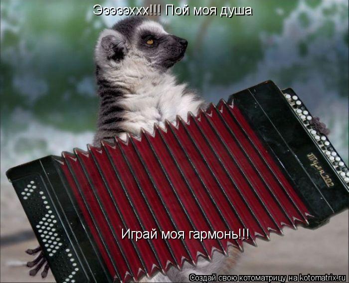 Котоматрица: Эээээххх!!! Пой моя душа Играй моя гармонь!!!