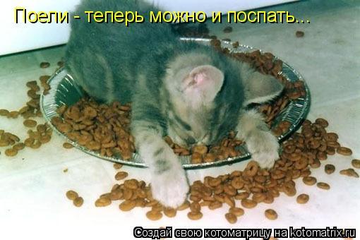 Котоматрица: Поели - теперь можно и поспать...