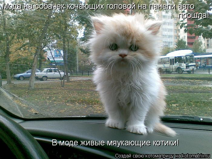 Котоматрица: Мода на собачек кочающих головой на панели авто прошла! В моде живые мяукающие котики!