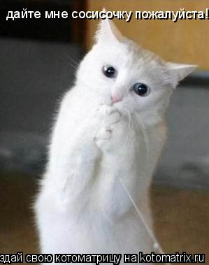 Котоматрица: дайте мне сосисочку пожалуйста!