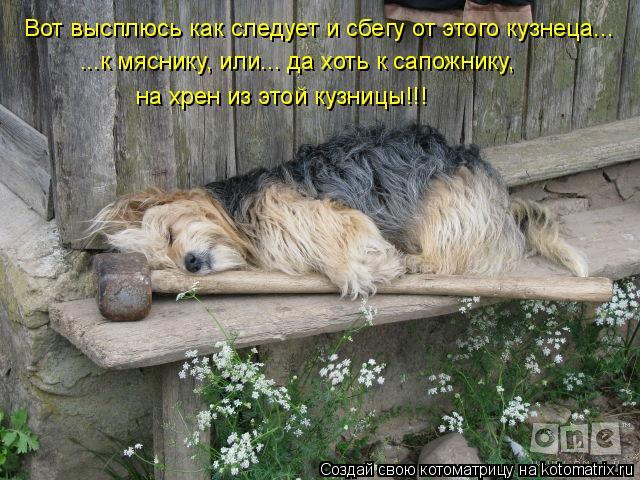 Котоматрица: Вот высплюсь как следует и сбегу от этого кузнеца... ...к мяснику, или... да хоть к сапожнику,  на хрен из этой кузницы!!!