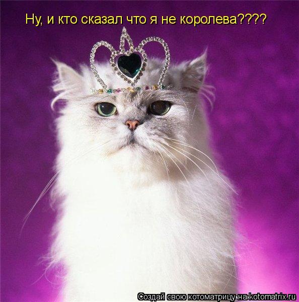 Котоматрица: Ну, и кто сказал что я не королева????