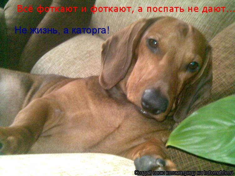 Котоматрица: Всё фоткают и фоткают, а поспать не дают... Не жизнь, а каторга!