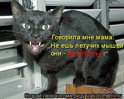 "Котоматрица: Говорила мне мама: ,,Не ешь летучих мышей они -  ВАМПИРЫ !"""