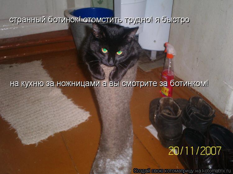 Котоматрица: странный ботинок! отомстить трудно! я быстро на кухню за ножницами а вы смотрите за ботинком!
