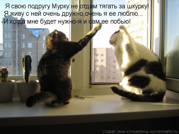 Котоматрица: Я свою подругу Мурку не отдам тягать за шкурку! Я живу с ней очень дружно,очень я ее люблю... И когда мне будет нужно-я и сам ее побью!