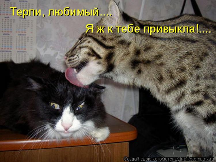 Котоматрица: Терпи, любимый.... Я ж к тебе привыкла!....