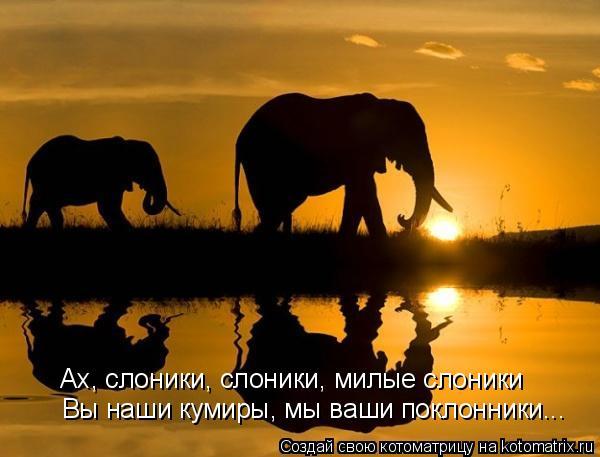 Котоматрица: Ах, слоники, слоники, милые слоники Вы наши кумиры, мы ваши поклонники...