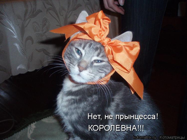 Котоматрица: Нет, не прынцесса! КОРОЛЕВНА!!!