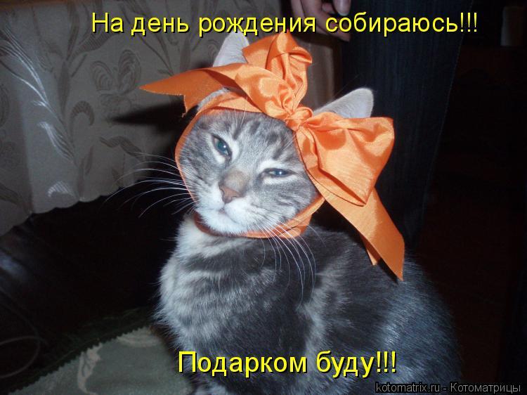 Котоматрица: На день рождения собираюсь!!! Подарком буду!!!