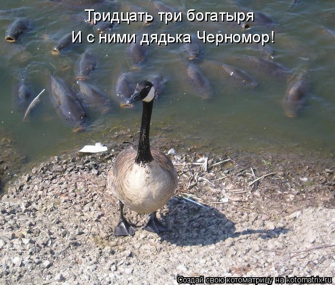 Котоматрица: Тридцать три богатыря И с ними дядька Черномор!