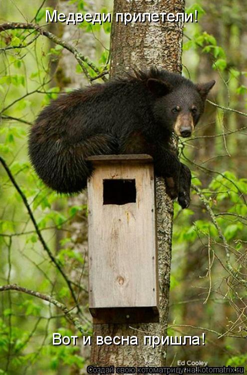 Котоматрица: Медведи прилетели! Вот и весна пришла!