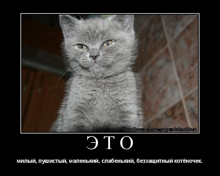 Котоматрица: Это милый, пушистый, маленький, слабенький, беззащитный котёночек.