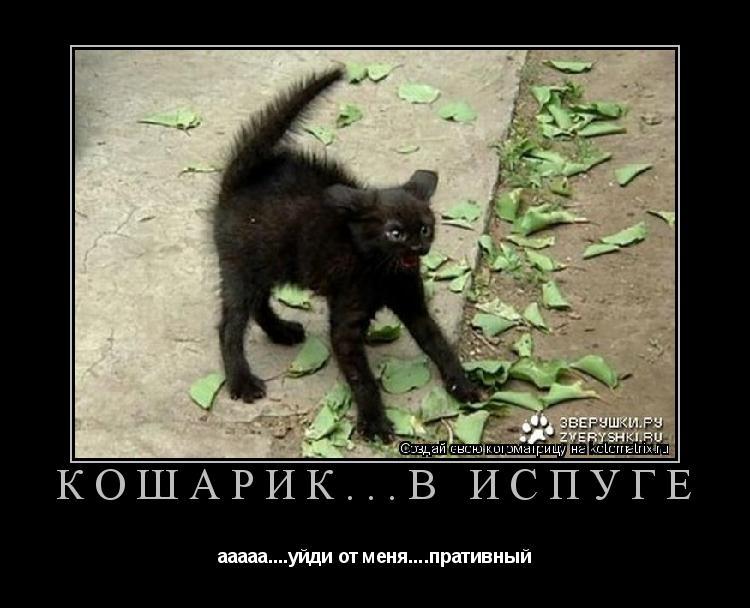 Котоматрица: Кошарик...в испуге ааааа....уйди от меня....пративный