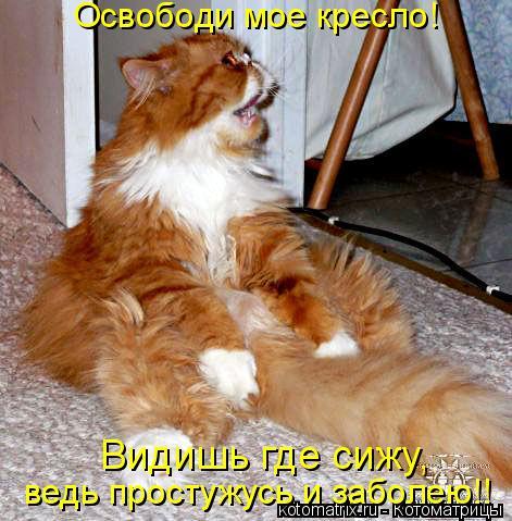 Котоматрица: Освободи мое кресло!  Видишь где сижу,  ведь простужусь и заболею!!