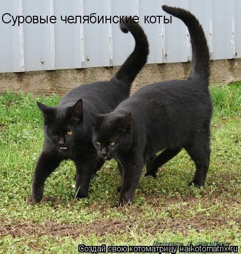 Котоматрица: Суровые челябинские коты