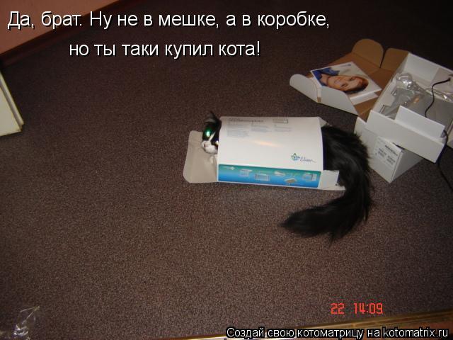 Котоматрица: Да, брат. Ну не в мешке, а в коробке, но ты таки купил кота!