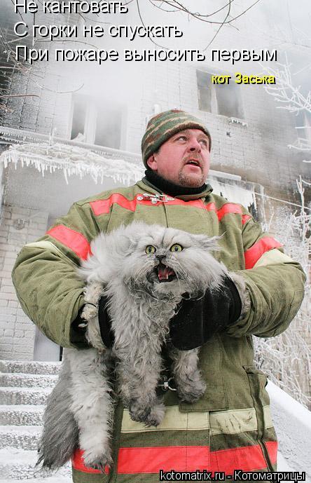 Котоматрица: Не кантовать С горки не спускать При пожаре выносить первым кот Заська