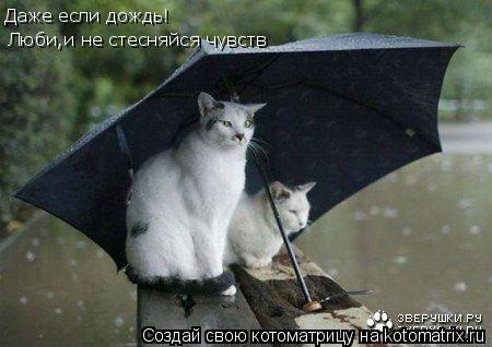 Котоматрица: Даже если дождь! Люби,и не стесняйся чувств