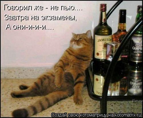Котоматрица: Говорил же - не пью.... А они-и-и-и.... Завтра на экзамены,
