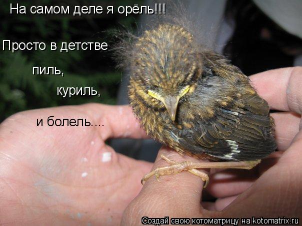 Котоматрица: На самом деле я орёль!!! Просто в детстве пиль, куриль, и болель....
