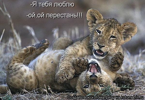 Котоматрица: -Я тебя люблю -ой,ой перестань!!!