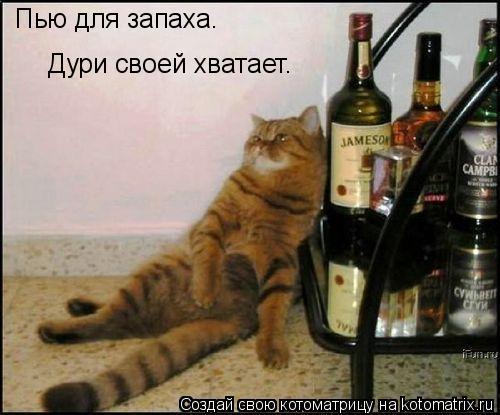 Котоматрица: Пью для запаха. Дури своей хватает.