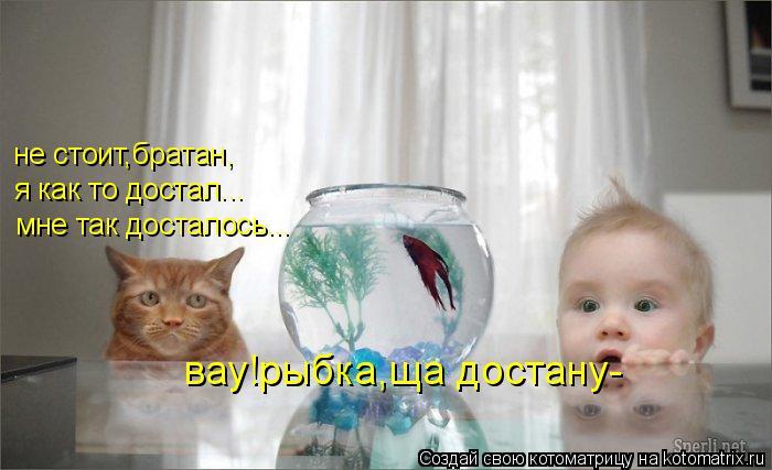 Котоматрица: мне так досталось... я как то достал... не стоит,братан, вау!рыбка,ща достану-