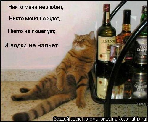 Котоматрица: Никто меня не любит,  Никто меня не ждет,  Никто не поцелует, И водки не нальет!