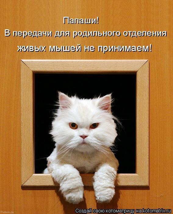 Котоматрица: Папаши! В передачи для родильного отделения живых мышей не принимаем!