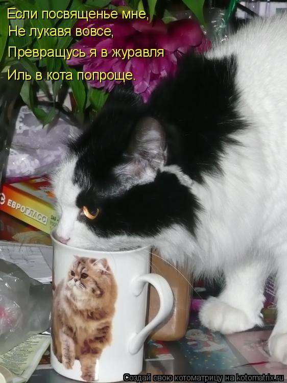 Котоматрица: Если посвященье мне, Не лукавя вовсе, Превращусь я в журавля Иль в кота попроще.