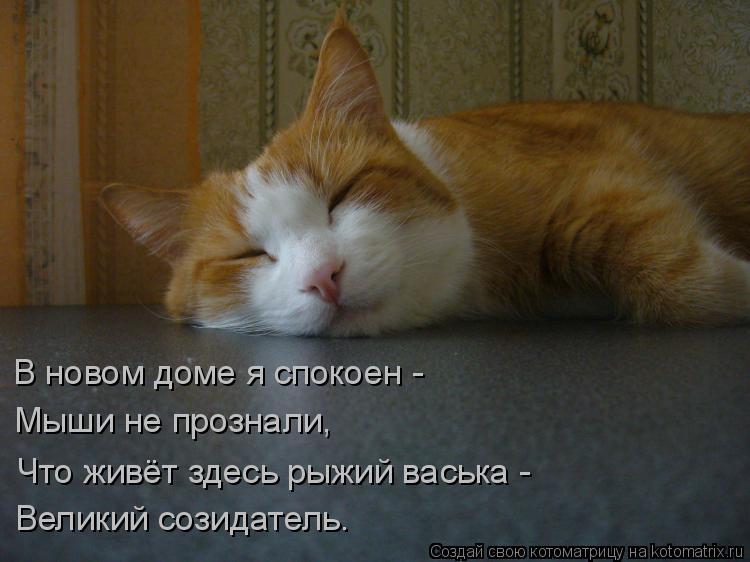 Котоматрица: В новом доме я спокоен - Мыши не прознали, Что живёт здесь рыжий васька - Великий созидатель.