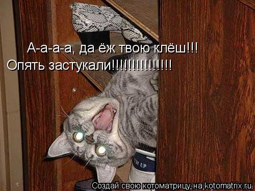 Котоматрица: А-а-а-а, да ёж твою клёш!!! Опять застукали!!!!!!!!!!!!!!!