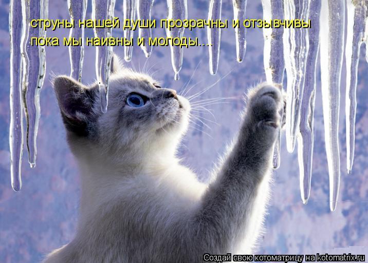 Котоматрица: струны нашей души прозрачны и отзывчивы пока мы наивны и молоды....
