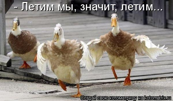 Котоматрица: - Летим мы, значит, летим...