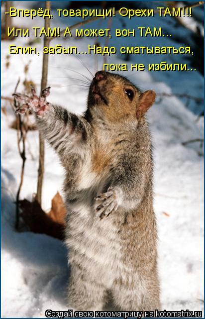 Котоматрица: -Вперёд, товарищи! Орехи ТАМ!!! Блин, забыл...Надо сматываться, пока не избили... Или ТАМ! А может, вон ТАМ...