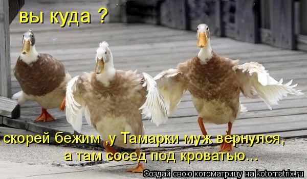 Котоматрица: вы куда ? скорей бежим ,у Тамарки муж вернулся, а там сосед под кроватью...