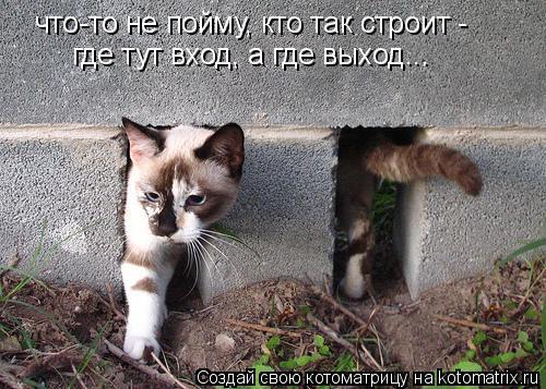 Котоматрица: что-то не пойму, кто так строит - где тут вход, а где выход...