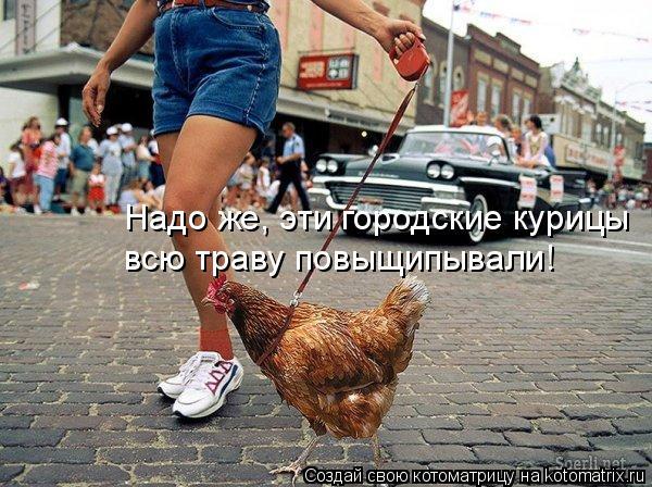 Котоматрица: Надо же, эти городские курицы всю траву повыщипывали!