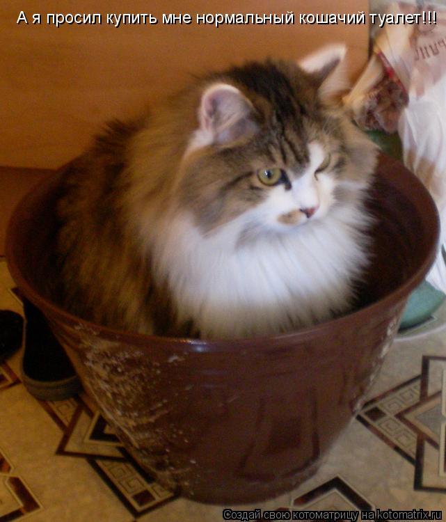 Котоматрица: А я просил купить мне нормальный кошачий туалет!!!