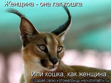 Котоматрица: Женщина - она как кошка Или кошка, как женщина ....