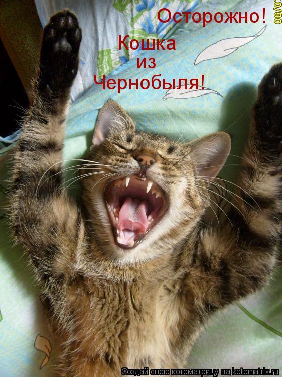 Котоматрица: Осторожно! Кошка из Чернобыля!