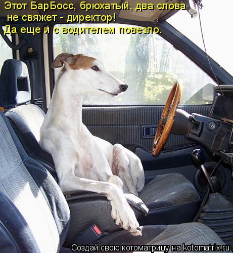 Котоматрица: Этот БарБосс, брюхатый, два слова   не свяжет - директор! Да еще и с водителем повезло.